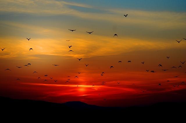 Herbstvögel