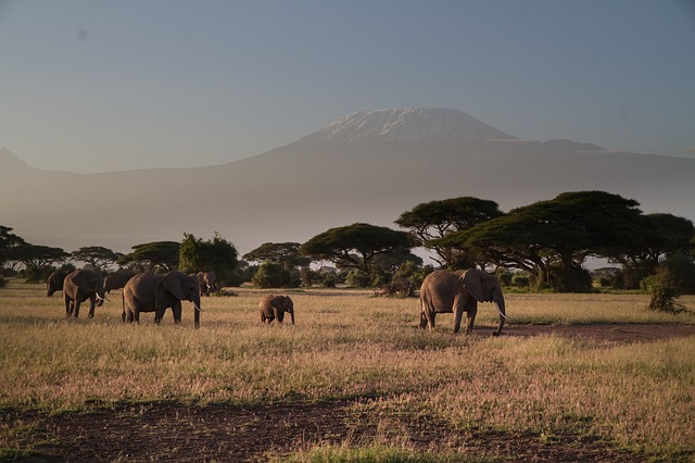 elephant-279992_640